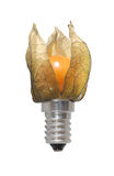 Japanese-lantern with electrical socket. Japanese-lantern with an electrical socket. Symbol of innovative or alternative thinking Royalty Free Stock Photo