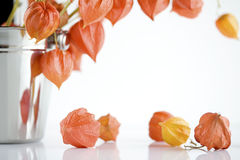Japanese lantern flowers Stock Photo