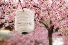 Japanese lantern stock photography