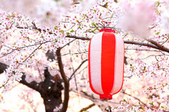 Japanese lantern with sakura Royalty Free Stock Photos