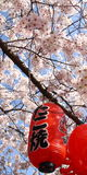 Japanese lantern in spring Stock Photos