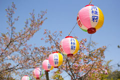 Japanese lanterns. Pink Japanese lanterns in sukura festival at Maruyama park in Kyoto, Japan Stock Photos