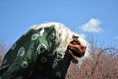 Japanese Lion Dance Royalty Free Stock Photo