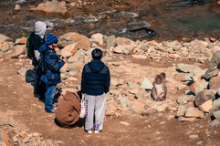 Japanese macaques. Nagano, Japan - March 05, 2015:  A group of tourists photographing Japanese macaques snow monkeys at Jigokudani Yaenkoen (snow monkey park Stock Photography