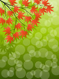 Japanese Maple. Abstract background with a tree branch. Vector illustration Royalty Free Stock Image