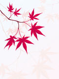 Japanese Maple royalty free illustration