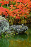 Japanese Maple Autumn Pond Stock Photo