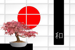 Japanese maple bonsai Royalty Free Stock Photos