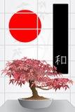Japanese maple bonsai Stock Image