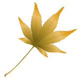 Japanese Maple leave Stock Photography