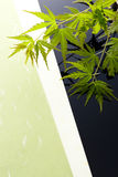 Japanese maple leaves. Japanese young maple on japanese paper Stock Photography