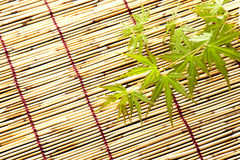 Japanese maple leaves. Japanese young maple on bamboo blind in summer Royalty Free Stock Images