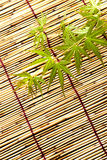 Japanese maple leaves. Japanese young maple on bamboo blind in summer Stock Photos