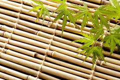 Japanese maple leaves. Japanese young maple on bamboo blind in summer Royalty Free Stock Image