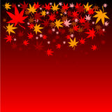 Japanese Maple Leaves Autumn Background Royalty Free Stock Photo