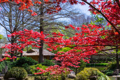 Japanese Maple and Meditation Area Stock Image
