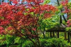 Japanese Maple and Pagoda Stock Photos
