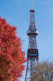 Japanese maple and Sapporo TV Tower Royalty Free Stock Photos