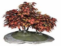 Japanese maple tree bonsai - 3D render Stock Photo