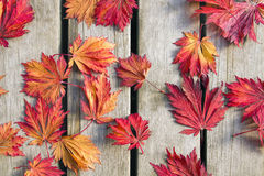 Japanese Maple Tree Leaves on Wood Deck. Background in Fall Season stock image