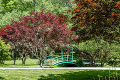 Japanese Maples by Bridge Stock Images