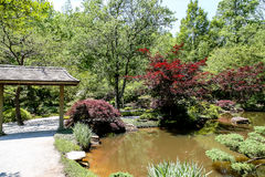 Japanese Maples and Garden Stock Images