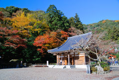Japanese maples with a temple. Royalty Free Stock Photos