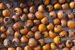 Japanese medlar Royalty Free Stock Photo