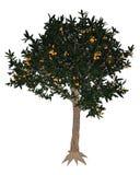 Japanese medlar tree - 3D render Stock Images