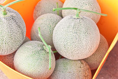 Japanese melons in a plastic basket Royalty Free Stock Photos