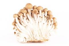 Japanese mushrooms on white stock photography
