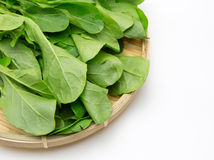 Japanese Mustard Spinach on a bamboo colander Stock Photography