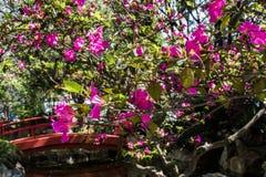 Japanese neighborhood name liberty oriental garden on sunny day september stock photos