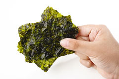 Japanese Nori Royalty Free Stock Photography