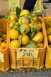 Japanese orange Stock Image