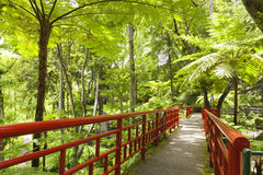 Japanese ornamental garden with lush ferns, palms, trees Stock Photos