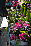 Japanese outdoor flower shop Stock Photo