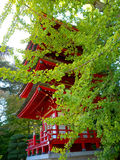 Japanese Pagoda. View between green leaves of red Japanese pagoda in San Francisco Japanese garden in Golden Gate Park Royalty Free Stock Photography