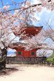 Japanese pagoda and sakura flowers, Miyajima island, Japan stock photo