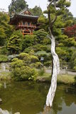 Japanese Pagoda and Tree Stock Photos