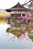 Japanese palace. Cherry bossom and japanese palace with reflex on water Stock Image