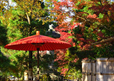 Japanese parasol and autumn leaves, Japan. Stock Photography
