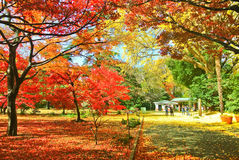 Japanese park in autumn in Tokyo, Japan. Stock Images