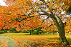 Japanese park in autumn in Tokyo, Japan. Royalty Free Stock Photos