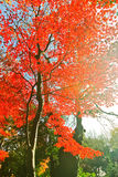 Japanese park in autumn in Tokyo, Japan. Stock Photos