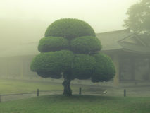 Japanese park tree Royalty Free Stock Photos