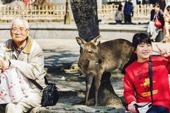 Japanese people and deer at the public park royalty free stock photography