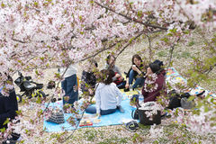 Japanese people sitting on the ground in Hanami festival Royalty Free Stock Photography