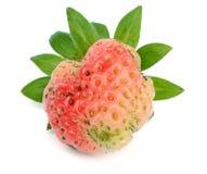 Japanese strawberry fruit on white.