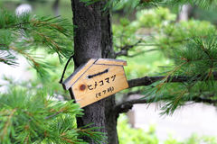 Japanese Pine Tree. With wood label, showing its species Stock Images